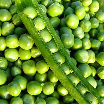 купити насіння гороху